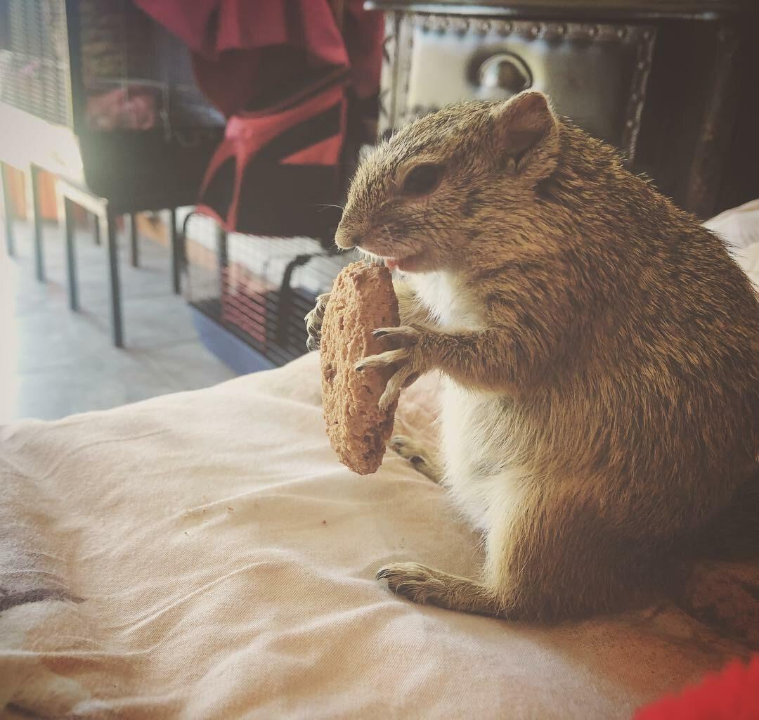 Wiewiórka, którą opiekuje się Simeone