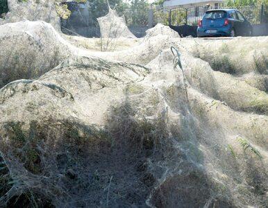 300-metrowa pajęczyna na greckiej plaży