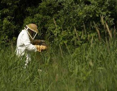 Najbardziej uczulają nas białka roztoczy kurzu domowego, a nie pyłki traw