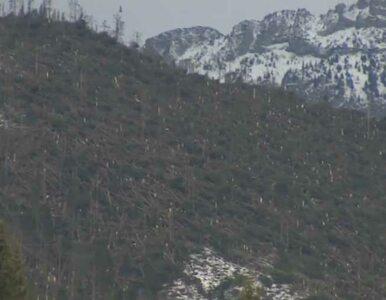 Wielkie sprzątanie w Tatrach po wichurach