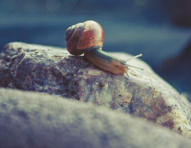 Śluz ślimaka ogrodowego pomoże zwalczać bakterie?