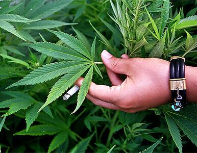Lekarz z CZD dostał zakaz leczenia medyczną marihuaną