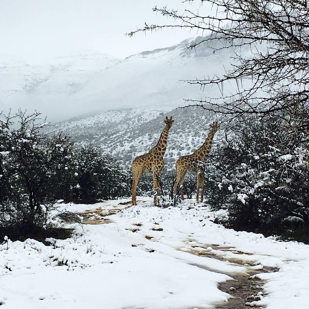 Śnieg w RPA