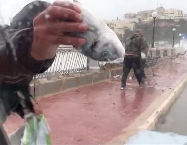 Sztorm u wybrzeży Malty. Mieszkańcy wyspy zbierali ryby... na ulicach