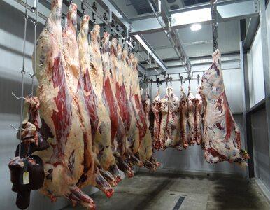Dobrostan zwierząt a wolność religii. W Belgii wprowadzono zakaz uboju...