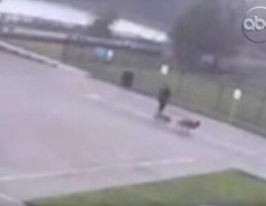 Trafił go piorun, gdy wyprowadzał psy. Przerażające nagranie