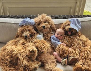 """Niezwykła przyjaźń chłopczyka i trzech gigantycznych psów. """"On myśli, że..."""
