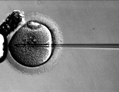"""Regulacja in vitro. """"Patrzę na zamrażanie istnień ludzkich z ich..."""