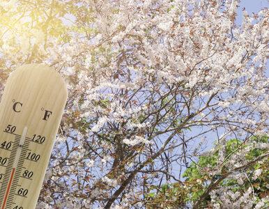 Prognoza pogody na 20 kwietnia. Czy w Wielką Sobotę będzie ciepło?
