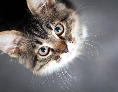 """Kot wrócił do niej po 11 latach. """"Nie mogę uwierzyć, że żyje"""""""