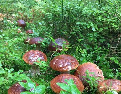 Mądre i tajemnicze grzyby