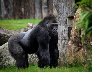 Alarmujący raport WWF. Liczebność dzikich zwierząt spadła o 68 procent