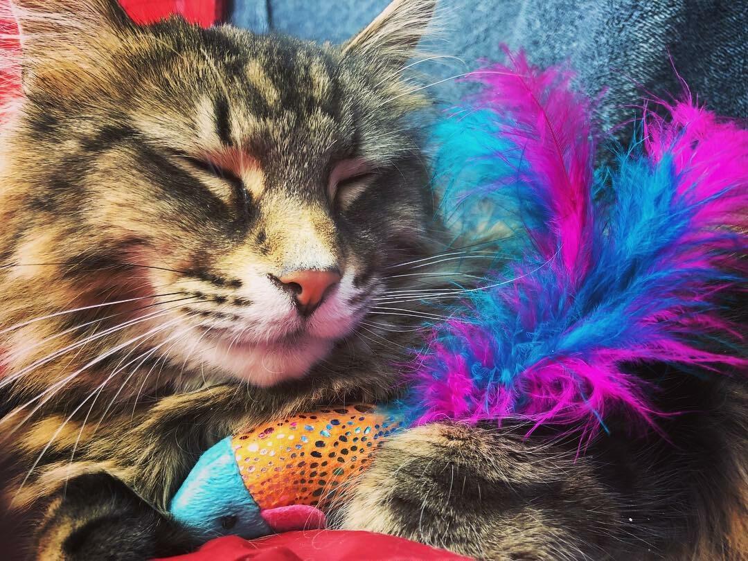 """Kot Leo, gwiazda """"Smętarza dla zwierzaków"""""""