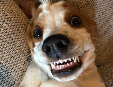 Te psy wiedzą, co to szczery uśmiech. I potrafią go zaprezentować światu