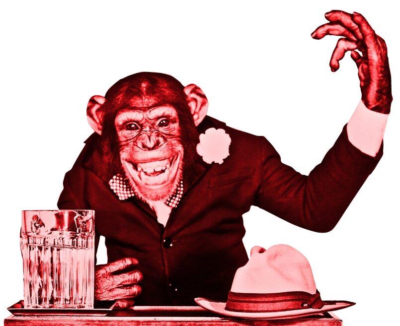 Małpi parlament. Co o polityce mówi obserwowanie małp