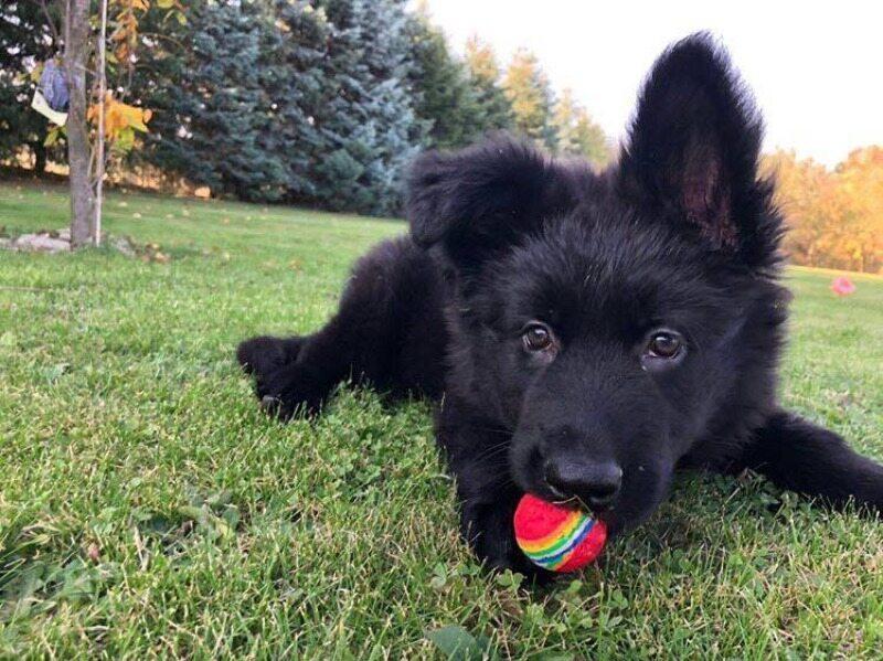 Zeena, pies Pawła Kukiza