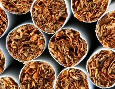 Tonami produkowali nielegalny tytoń - Skarb Państwa mógł stracić ponad...