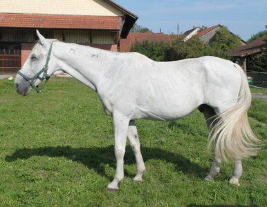 Totalizator Sportowy chce zakończyć historię wyścigów konnych w Warszawie?