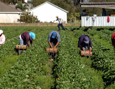 Będzie trudniej o pracę w Holandii? Nowe ograniczenia dla migrantów...