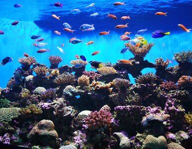 Podwodny ogród w M3