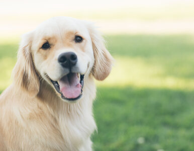 """""""Rz"""": Nowe mandaty dla właścicieli psów? Jest projekt rozporządzenia"""