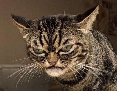 """Grumpy Cat ma godnego następcę. """"Aż strach patrzeć na te zdjęcia"""""""