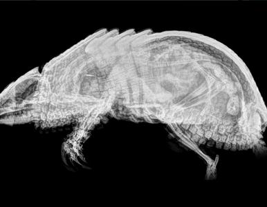 Zdjęcia rentgenowskie podopiecznych zoo. Zgadnij, jakie to zwierzęta