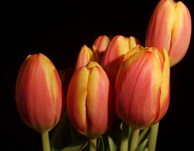 Rosja zapowiada embargo na kwiaty z Holandii