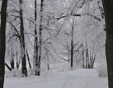 W tym tygodniu pogoda nas zaskoczy. Idzie prawdziwa zima