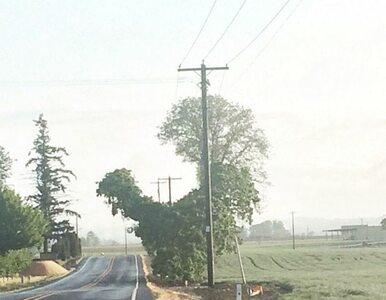 Te drzewa nie wyglądają normalnie. Warto dokładnie się im przyjrzeć