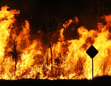 Deloitte: 2020 rok będzie pierwszym, w którym kryzys klimatyczny odbije...