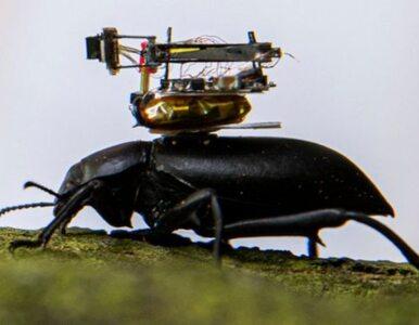 Świat z perspektywy owada. Naukowcy przeprowadzili niezwykły eksperyment